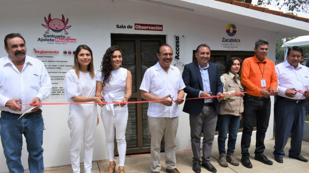 Inauguran santuario del ajolote mexicano en Zacatelco