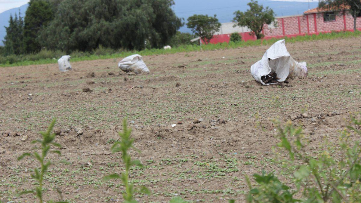 En desastre 60% de la tierra, que AMLO aplique la ley: CCI