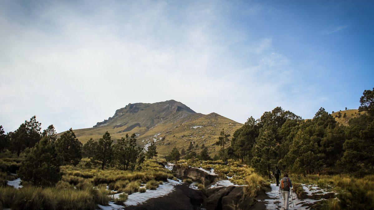 Hará Guardia Nacional estudio de los árboles ancestrales en La Malinche