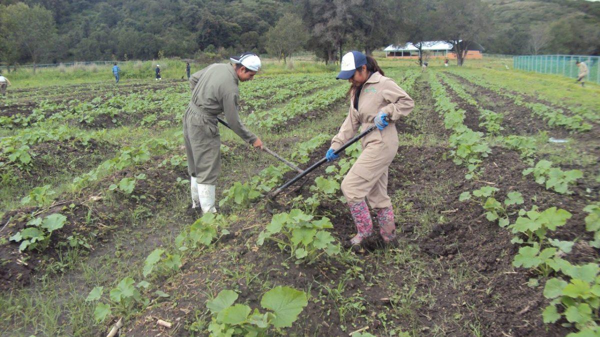 ¿Te gustaría estudiar Ingeniería en Agrotecnología?, ¡En Tlaxcala la puedes estudiar aquí!
