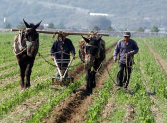 """""""Cuando el recurso llegó al estado de Tlaxcala no se canalizó al sector agrícola"""", Ana Lilia Rivera."""