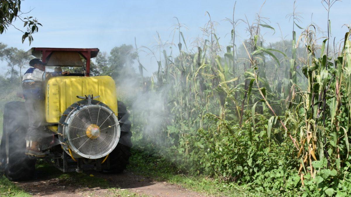Con producto amigable para el medio hambiente fumigan 100 hectáreas de cultivo en Zacatelco