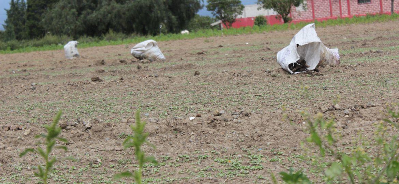Agricultura Campo Crisis Tierra