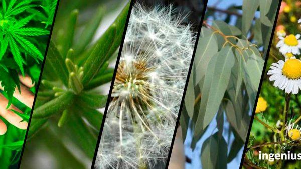 plantas-Tlaxcala
