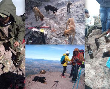 Perros-Guía-La-Malinche-Mascotas-Montaña-Montañismo-Escalar-Montes-Deportes