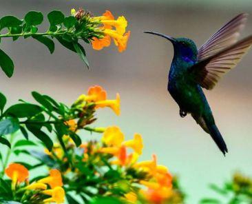 Colibrí-Animales-Extinción-Tlaxcala-Bosques