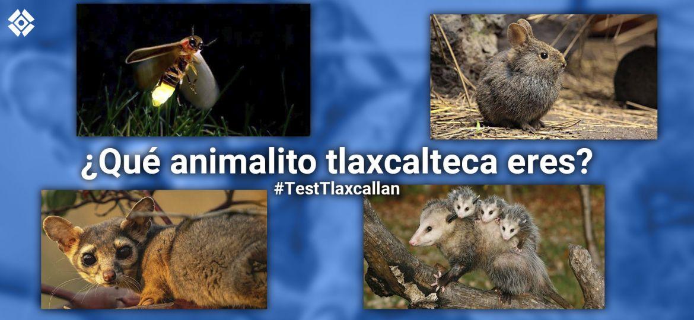 Test-Tlaxcallan-Tlaxcala-Ecología-Fauna-Animales-Peligro-Extinción