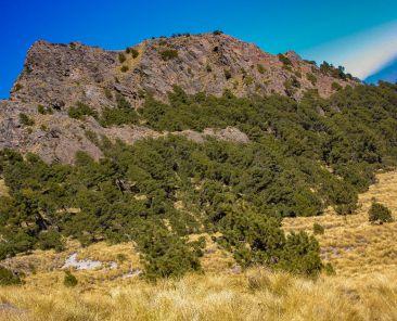 Bosques-Tlaxcala-Ecología