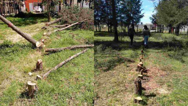 Xaloztoc-árboles-tala-deforestación