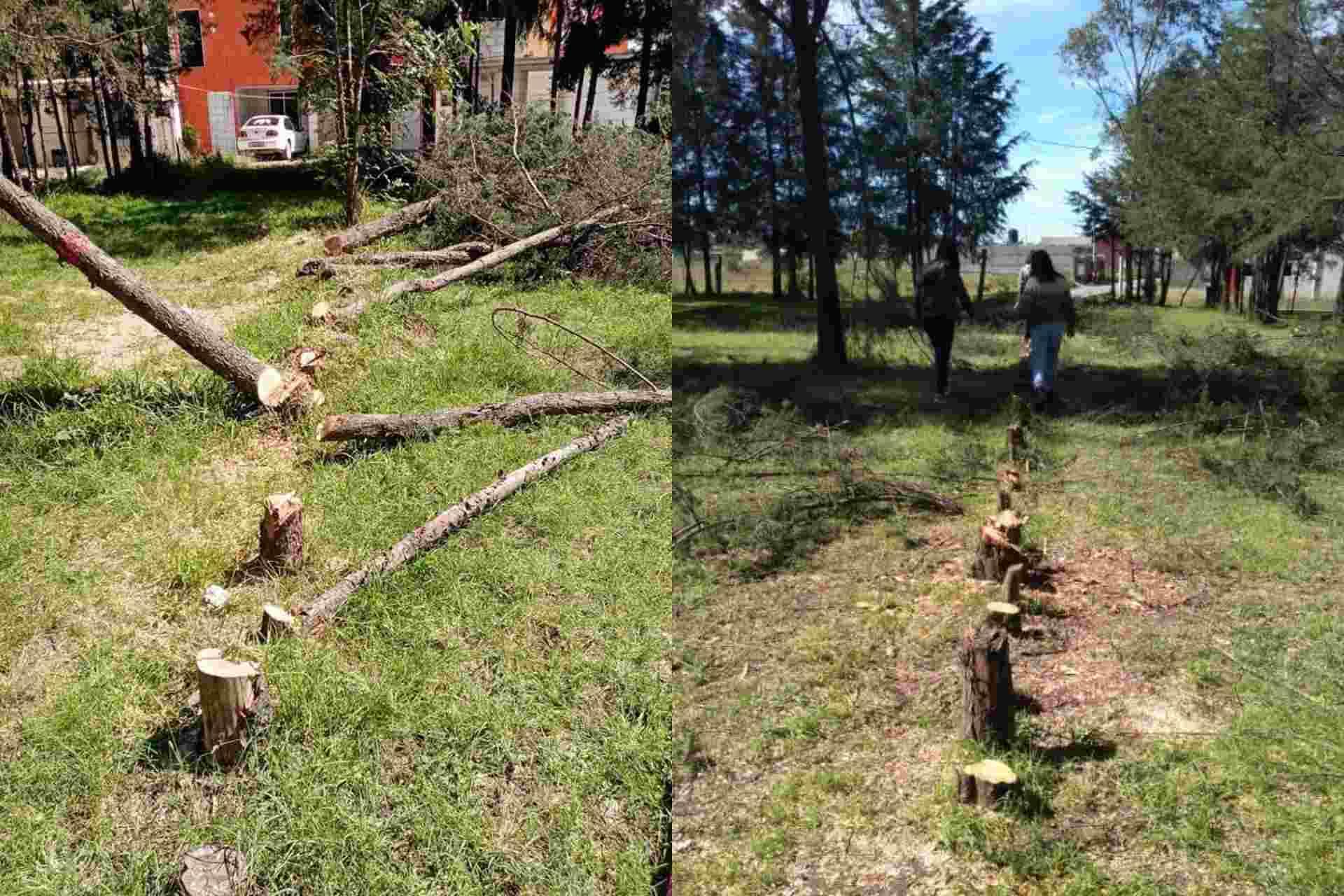malinche-Xaloztoc-árboles-tala-deforestación