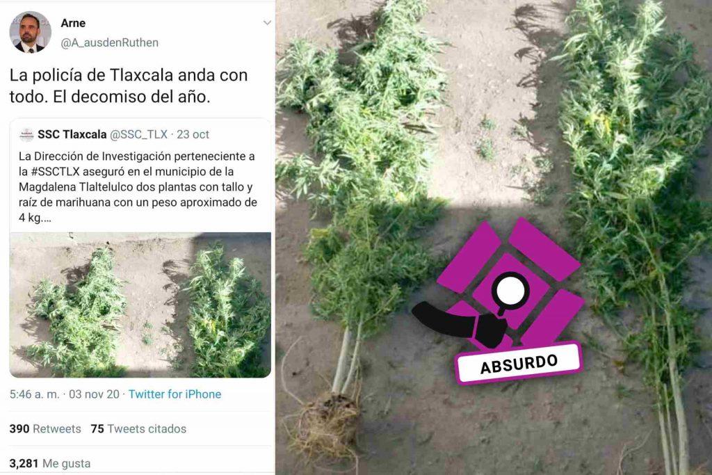 plantas-marihuana-plantas-Tlaxcala-escenario-mexico-burla