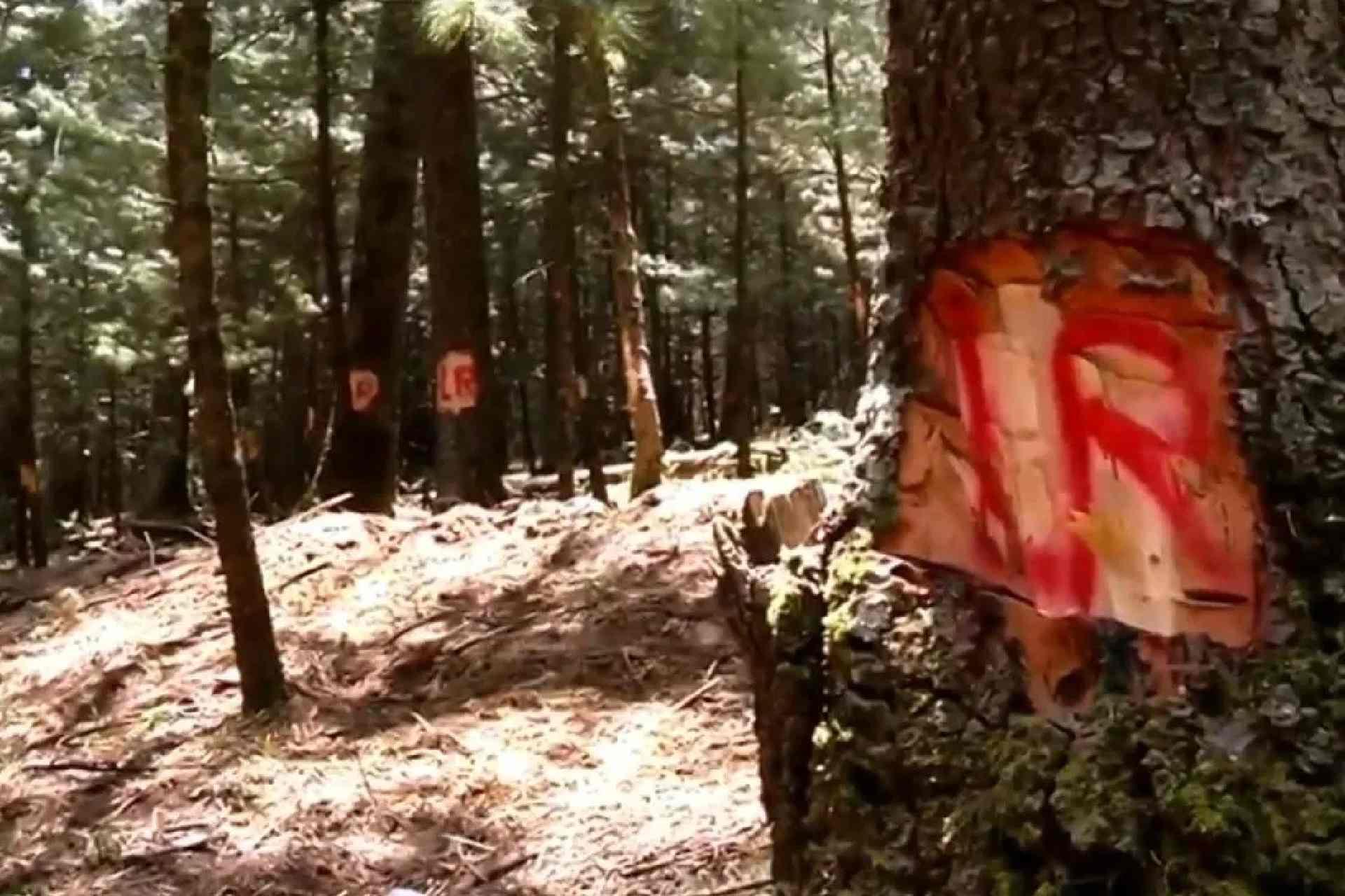 ingenieros forestales-Tlaxcala-La Malinche-Bosques-Tala de árboles