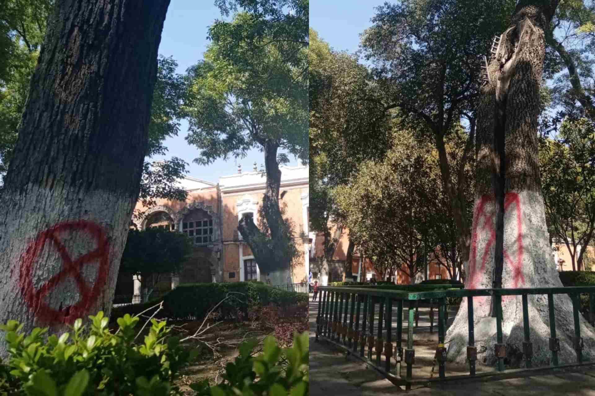 árboles-Plaza de la Constitución-SEDATU-Programa de Mejoramiento Integral de Barrios