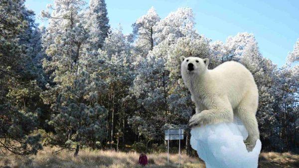 frío-Tlaxcala-2021-twitter