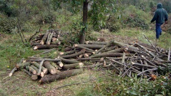 impunidad-Tala de árboles en la Malinche, preocupación de unos pocos