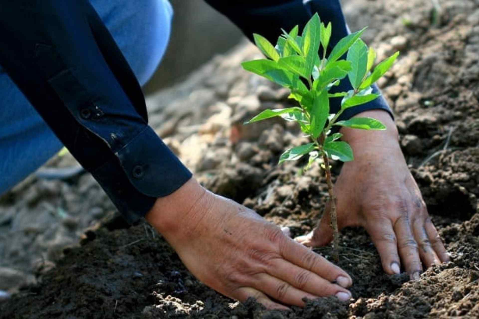 árboles-reforestación-índice de mortanda-ecología-CCE-Tlaxcala