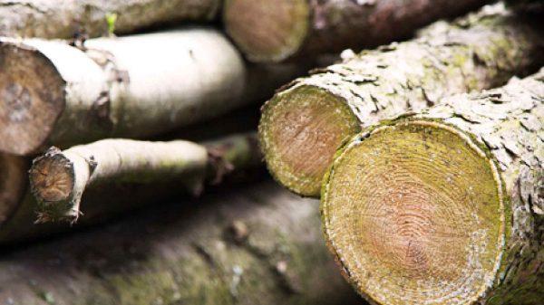 oxigeno-árboles-deforestacion-Tlaxcala-Mexico
