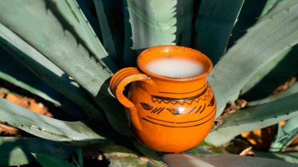 pulque-delitro y medio-emprendimiento-Tlaxcala