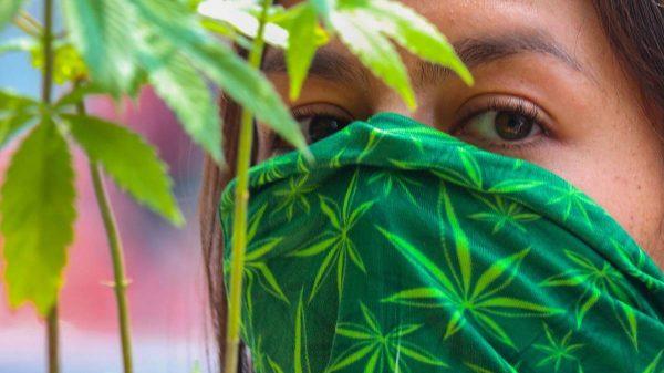 el-senado-de-mexico-aprueba-la-legalizacion-de-la-marihuana-recreativa-y-medicinal