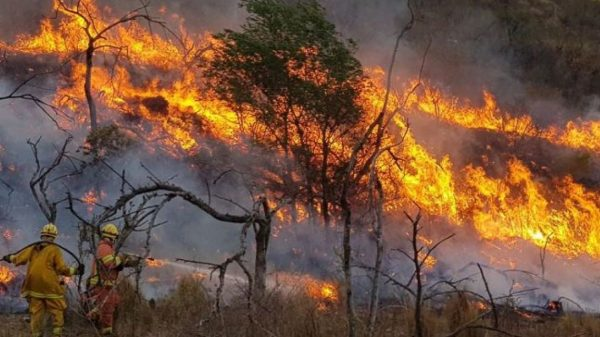 incendios forestales-tlaxcala-2021