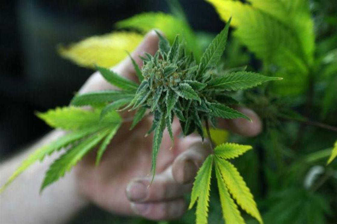 marihuana-Tlaxcala-mexico-escenario-legalizacion
