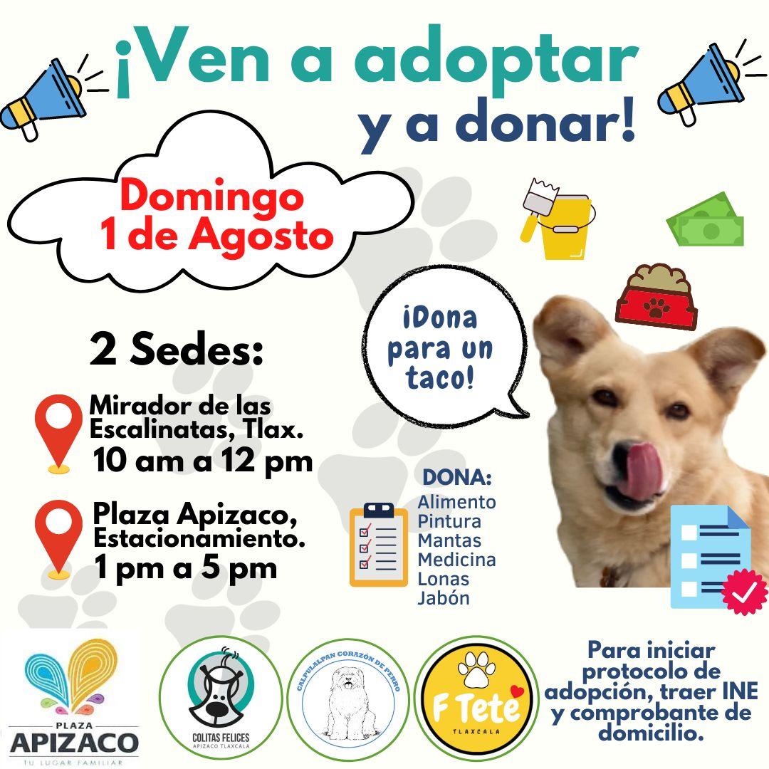 Perritos-Evento-Tlaxcala-Adopción