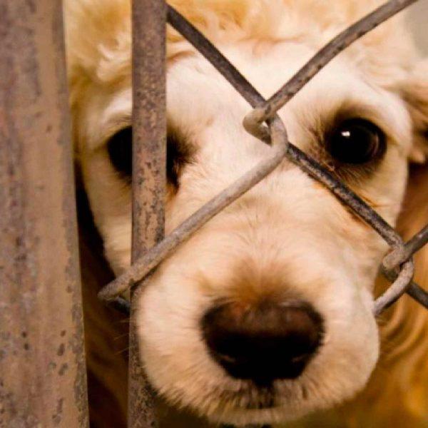maltrato animal-Tlaxcala-2021-sin-ley
