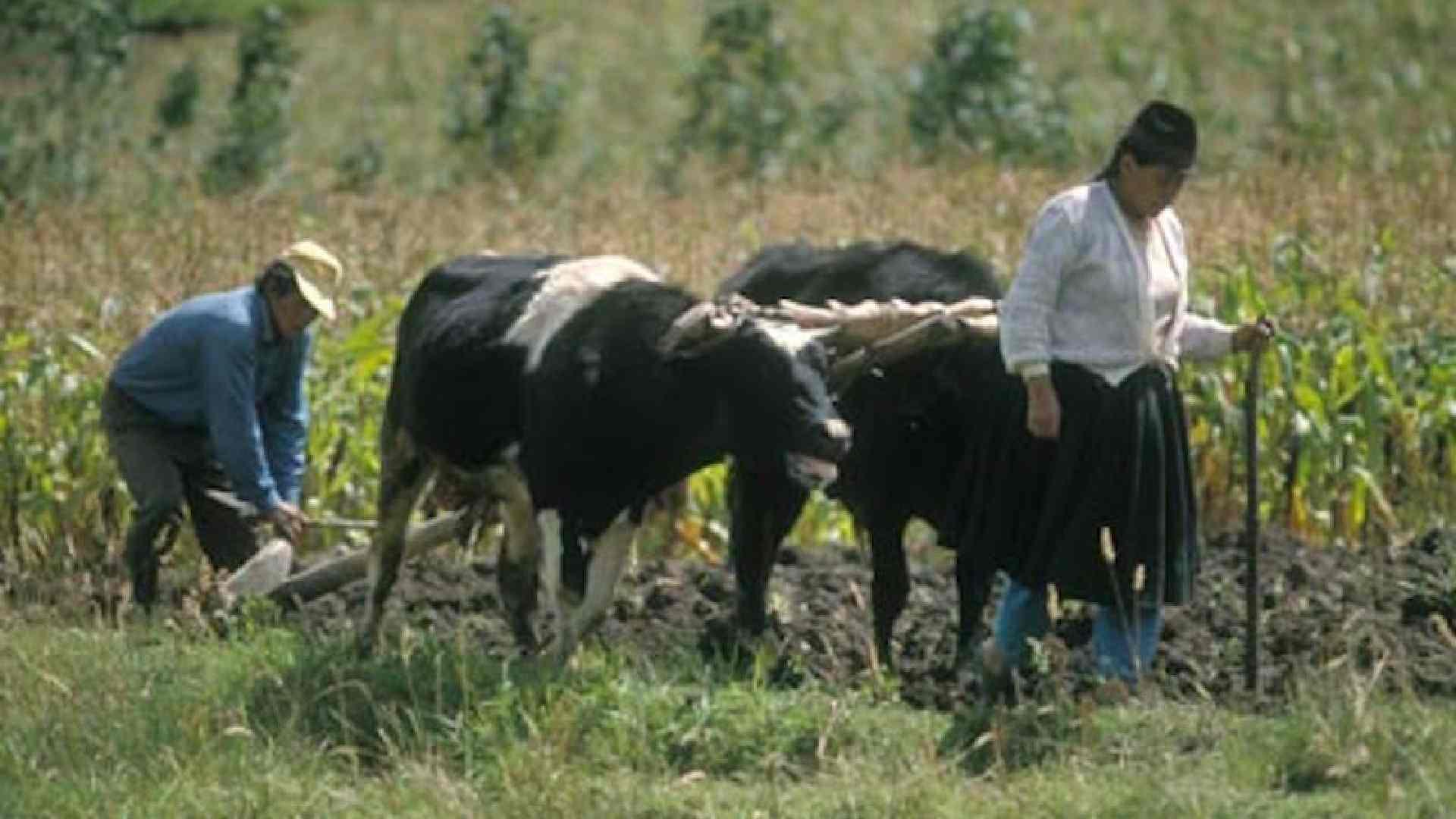 Campesinos-Agricultura-pérdida del campo-Tlaxcala-México-Huracán Grace