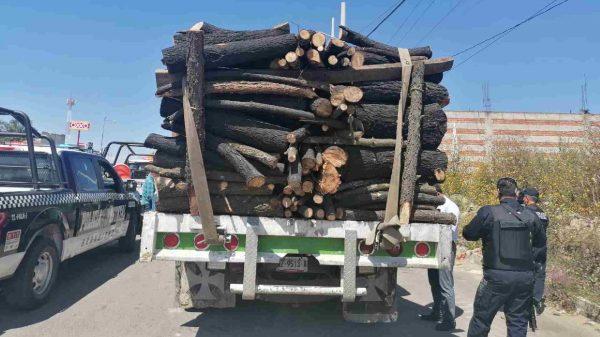 Tala ilegal-La Malinche-Lorena Cuéllar-saqueo-recurso natural-material forestal